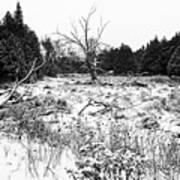 Quiet Winter Black And White Art Print