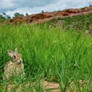 Rabbit In The Grass Art Print