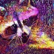 Raccoon Animal Cute Mammal  Art Print