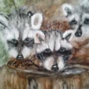 Raccoon Babies By Christine Lites Art Print by Allen Sheffield