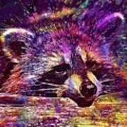Raccoon Wild Animal Furry Mammal  Art Print