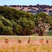 Nine Racing Whitetail Deer Art Print
