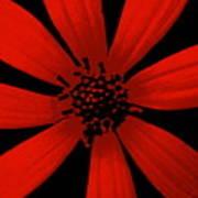 Radical Red Art Print