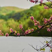 Radner Lake During The Spring Art Print