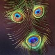 Raffiki Peacock Art Print