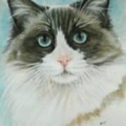 Ragdoll Art Print