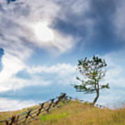 Rail Fence And A Tree Art Print