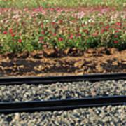 Rails And Roses Art Print