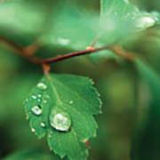 Rain Droplet On Leaf Art Print