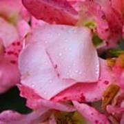 Rain Falls On Petals And All Art Print