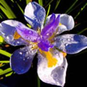 Rain Flower Morning Art Print