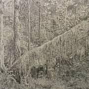 Rain Forest Art Print