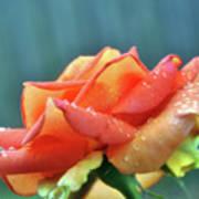 Rain And Rose Art Print