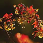 Rain Soaked Leaves-1 Art Print