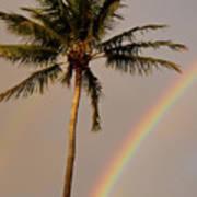 Rainbow And Palm Tree Art Print
