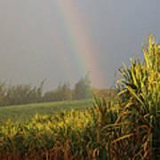 Rainbow Arching Into Field Behind Stream Art Print
