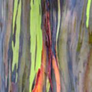Rainbow Eucalyptus 13 Art Print
