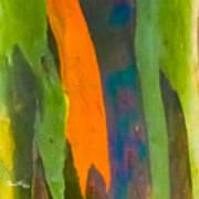 Rainbow Eucalyptus 5 Art Print