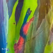 Rainbow Eucalyptus 7 Art Print