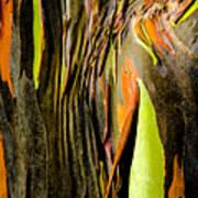 Rainbow Eucalyptus Bark Art Print