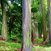 Rainbow Eucalyptus Print by Monica and Michael Sweet