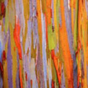 Rainbow Eucalytpus Art Print