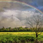 Rainbow Field Art Print