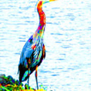 Rainbow Heron Art Print