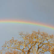 Rainbow Illumined Oak Tree Art Print