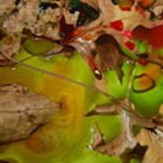 Rainbow Leaves 3 Art Print