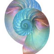 Rainbow Nautilus Pair On White Art Print