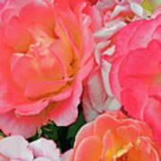 Rainbow Of Roses Art Print