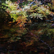 Rainbow Pickle Creek Reflections 6272 H_3 Art Print