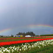 Rainbows At Tulip Festival Art Print
