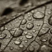 Raindrops #1 Art Print