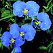 Raindrops In Blue Art Print
