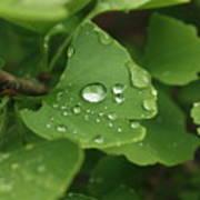 Raindrops On Ginko And Warm Woolen Mittens Art Print