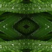 Raindrops On Green Leaves Collage Art Print