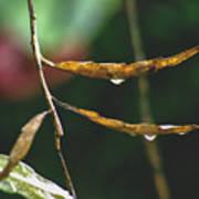 Raindrops On Leaf 3 Art Print
