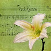 Raindrops On Lily Art Print