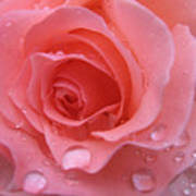 Raindrops On Roses And..... Art Print