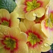 Raindrops On Yellow Flowers Art Print