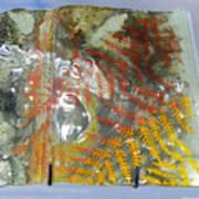 Rainforest Glass Page Art Print