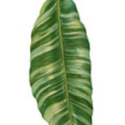 Rainforest Resort - Tropical Banana Leaf  Art Print