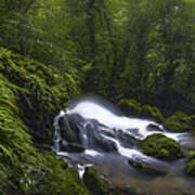 Rainforest Riverflow Scene Art Print