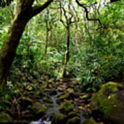 Rainforest Stream Art Print