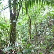 Rainforest Trees Art Print