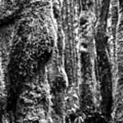 Rainforest Ubiquitous Growth  Art Print