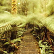 Rainforest Walk Art Print