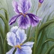 Rapsody Iris Art Print
